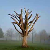 locky great photo tree